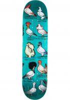 anti-hero-skateboard-decks-pfanner-show-pigeons-assorted-vorderansicht-0266861