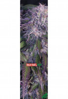 MOB-Griptape Griptape High Times Magazine incredible Vorderansicht