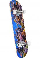 mini-logo-skateboard-komplett-fin-fur-feather-18-fish-tank-vorderansicht-0162609