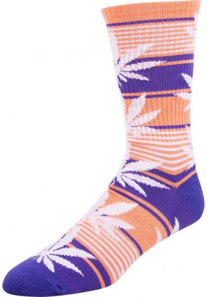 HUF Socken Plantlife Stripe blueiris vorderansicht 0631763