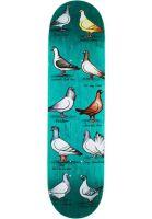 anti-hero-skateboard-decks-daan-show-pigeons-assorted-vorderansicht-0266862