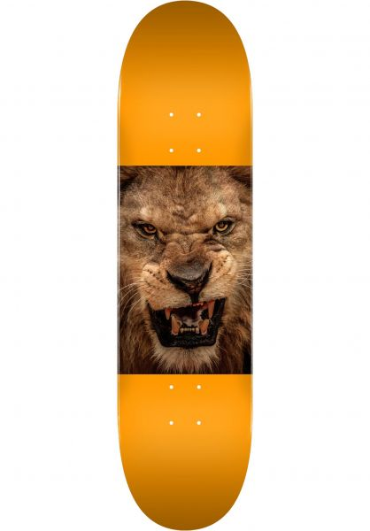 Mini-Logo Skateboard Decks ML Chevron Animal 14 Maple lion vorderansicht 0263312